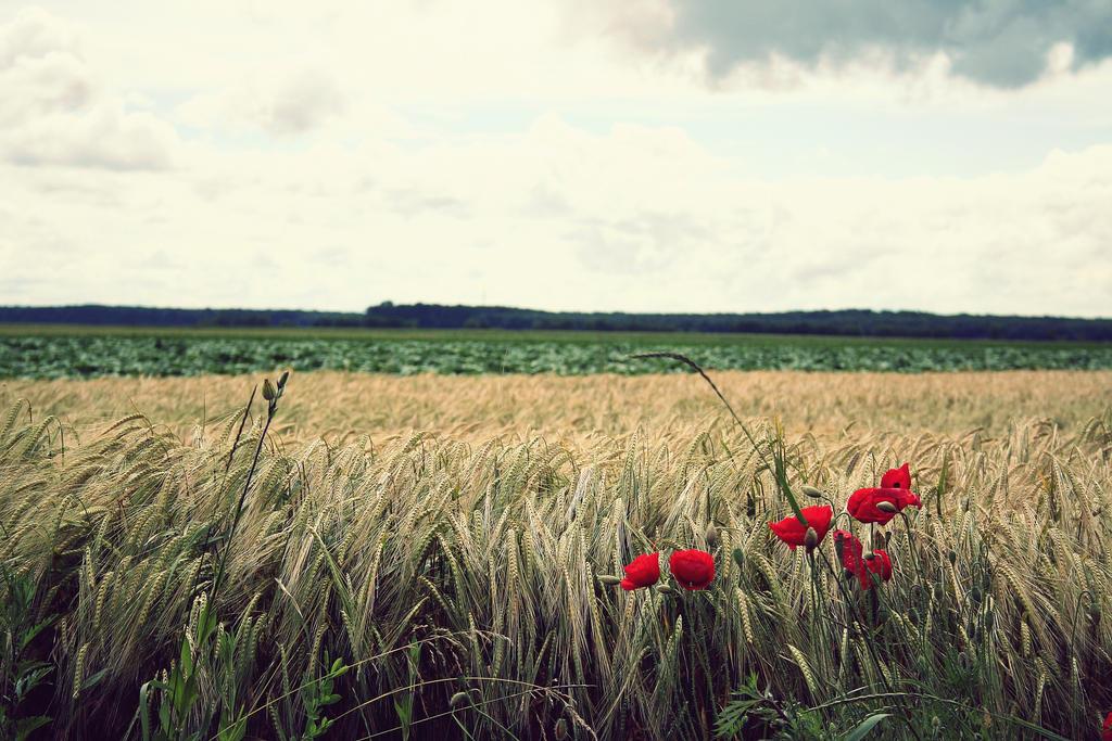 Poppy by prugi96