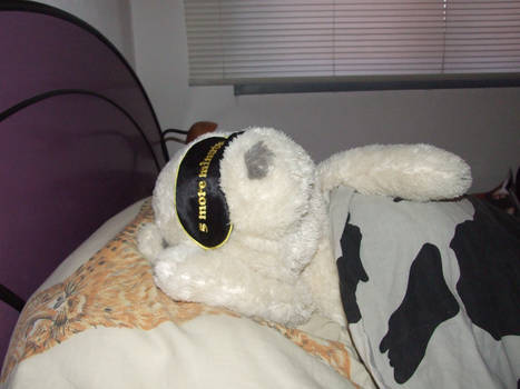 Albert taking a nap