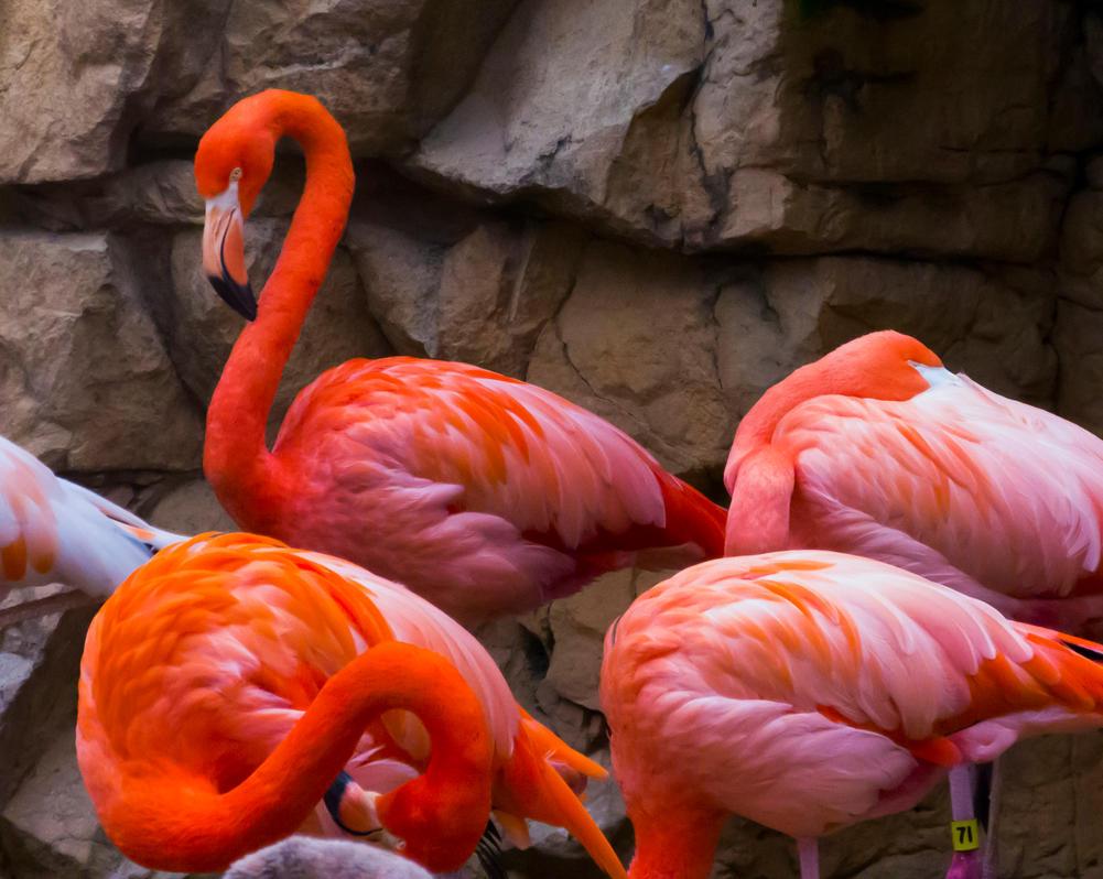 Flamingos by Alphasnivylove