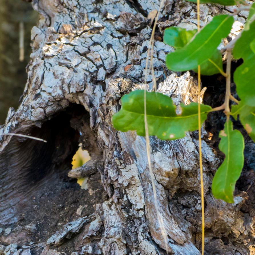 Tree Bark by Alphasnivylove