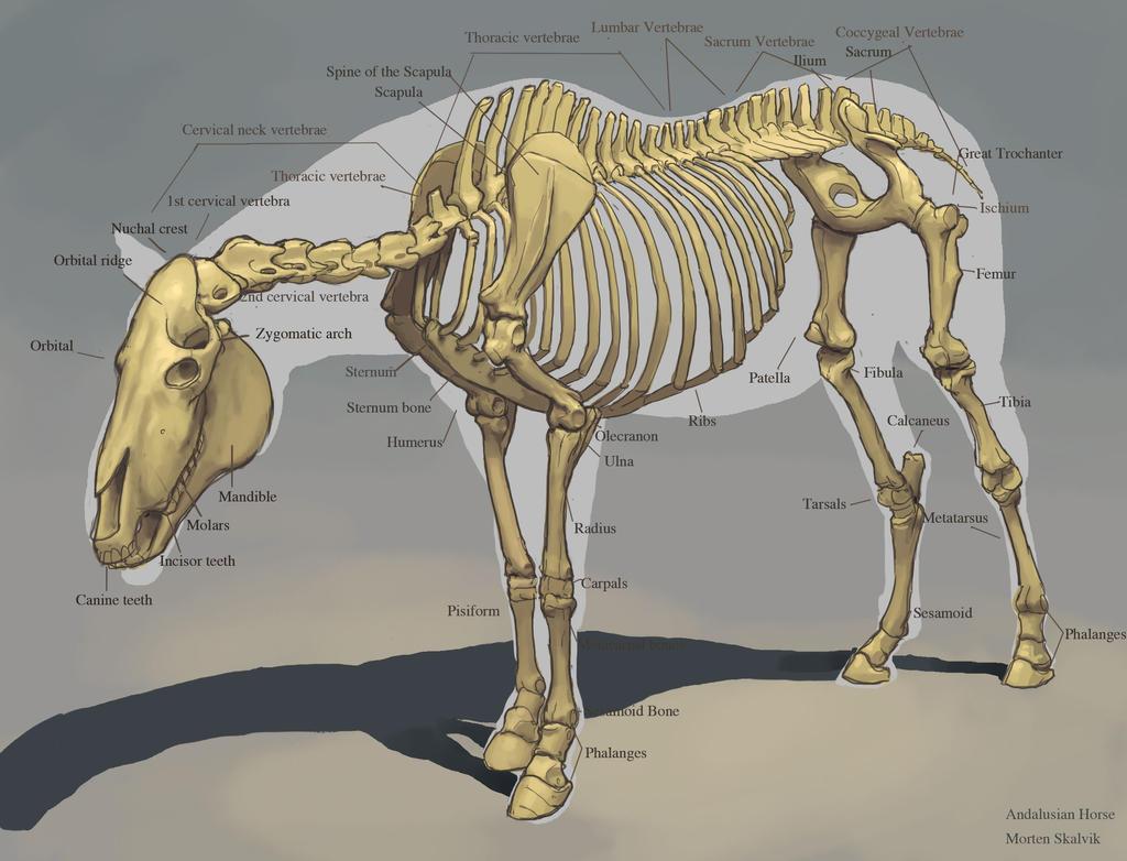 biology investigation on pinterest horses wolf skull. Black Bedroom Furniture Sets. Home Design Ideas