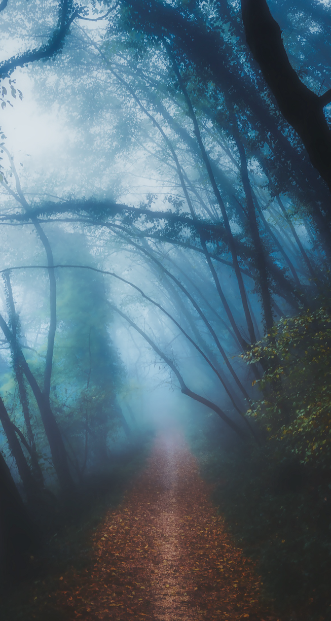 Foggy path - custom box background by Martith