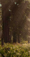 Misty forest - custom box background by Martith