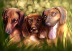 Commission #22 - Bavarian Mountain Hounds