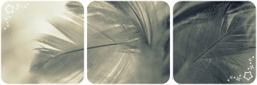Feathers deco divider by Martith