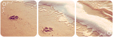 Pawprints on the sand deco divider by Martith