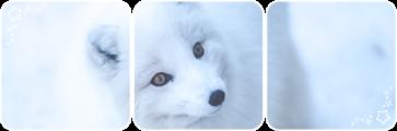 Arctic fox deco divider by Martith
