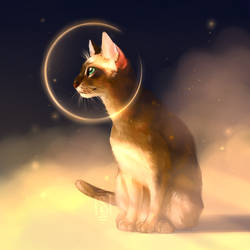 A: Abyssinian Cat [Cats A-Z] by Martith