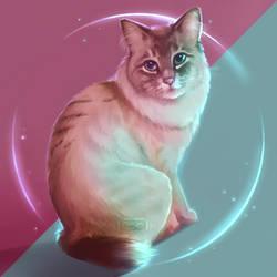 A: American bobtail [Cats A-Z] by Martith