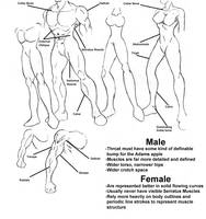 Anatomy Guide by ultranic-comics