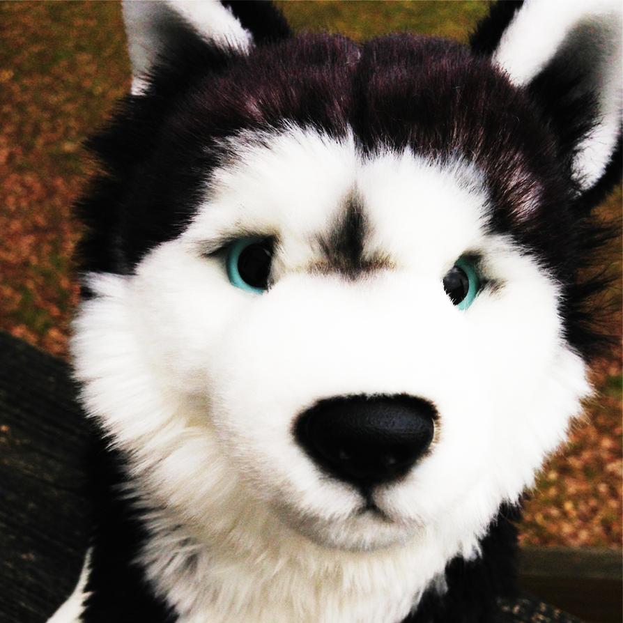 Webkinz Signature Siberian Husky Icon by sportstar104 on