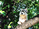 webkinz signature timber wolf 2