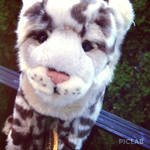 Webkinz Signature Snow Leopard Icon