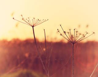 field flowers by DeadRabbid