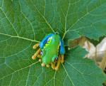 Frog Jewelry - Red Eye Tree Frog Pendant