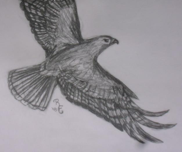 flying hawk by redfeatherfalconhawk