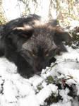 black snow by AdarkerNEMISIS