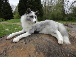 Platinum fox II by AdarkerNEMISIS
