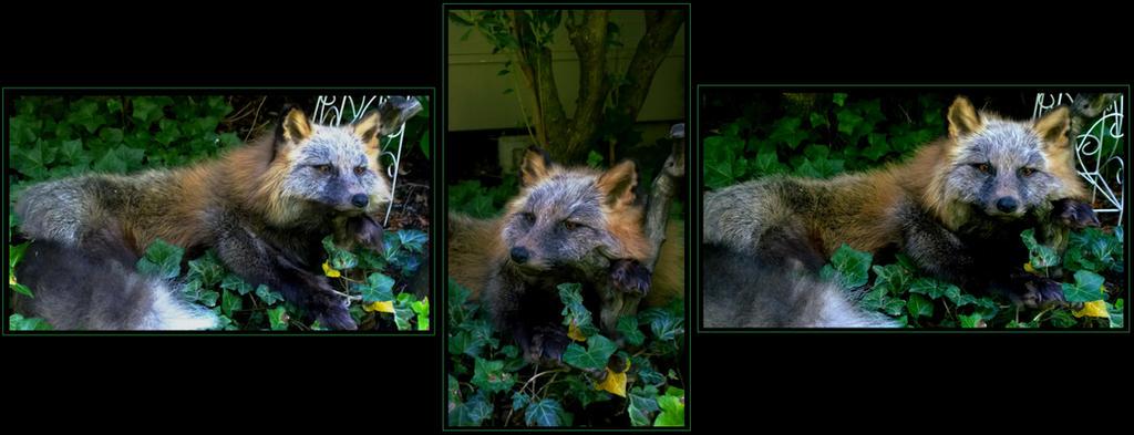 Kodiak Cross Fox by AdarkerNEMISIS