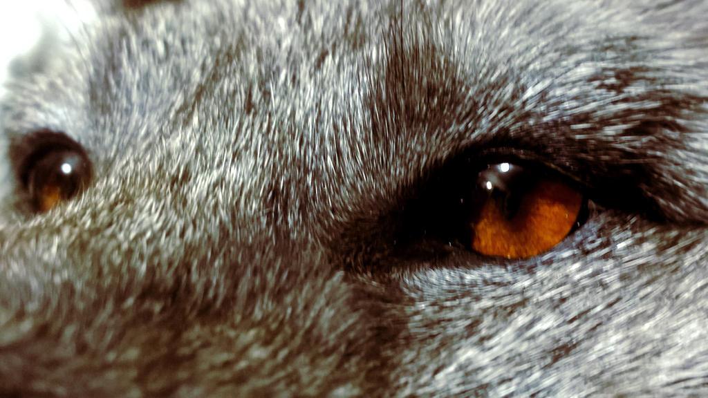 Blue Eyes by AdarkerNEMISIS