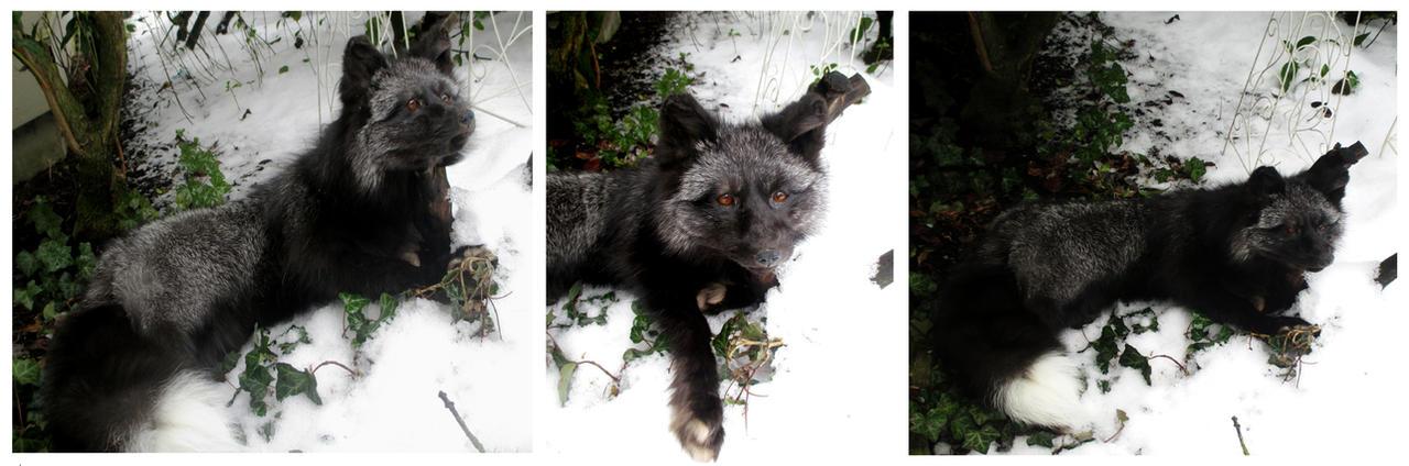 Winter Shadow by AdarkerNEMISIS