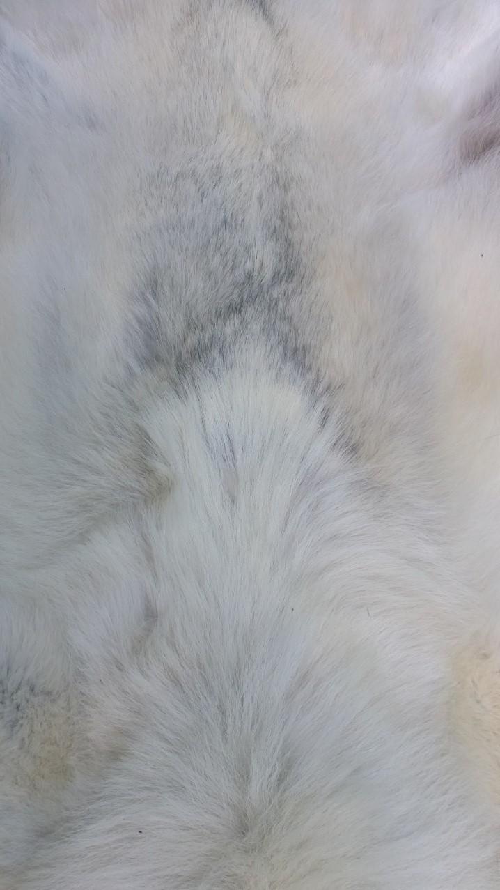 white wolf fur stock by AdarkerNEMISIS