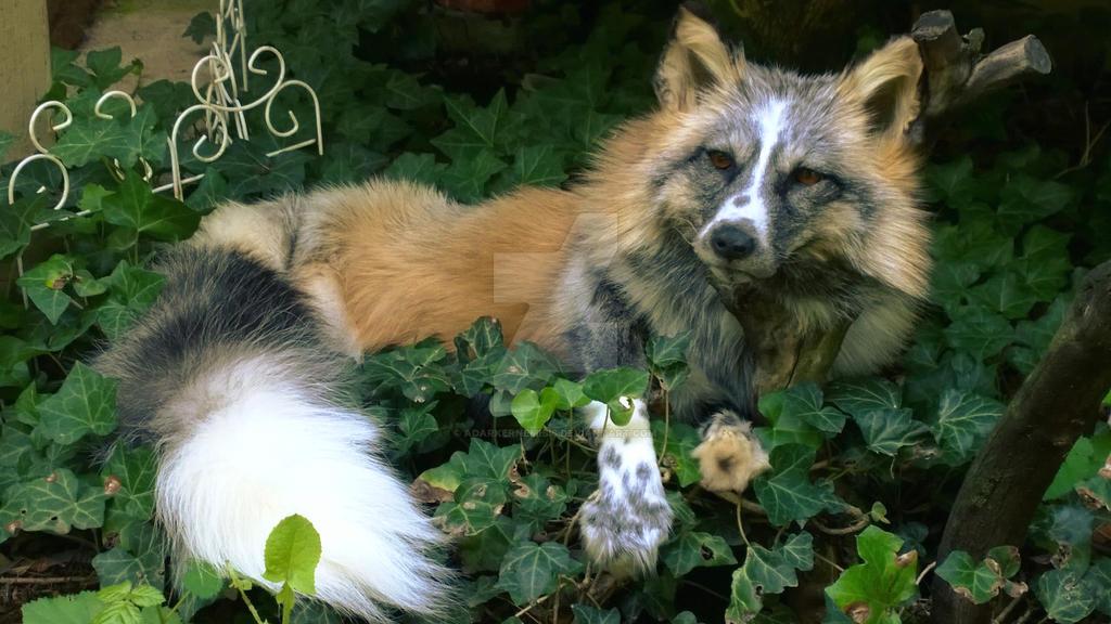 White Mark Cross fox by AdarkerNEMISIS