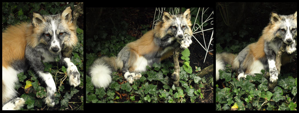 Light Calico Fox by AdarkerNEMISIS