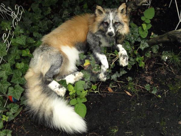 Calico fox plush by AdarkerNEMISIS