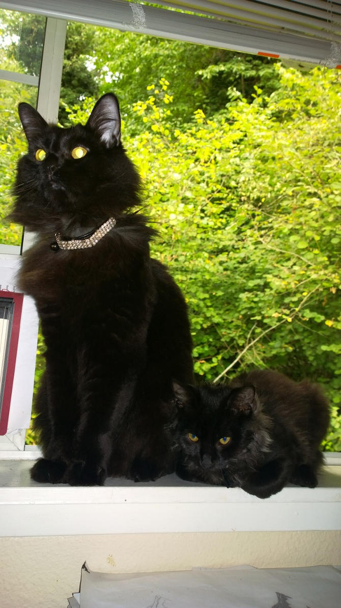 Lazer Kitty and Spawn by AdarkerNEMISIS