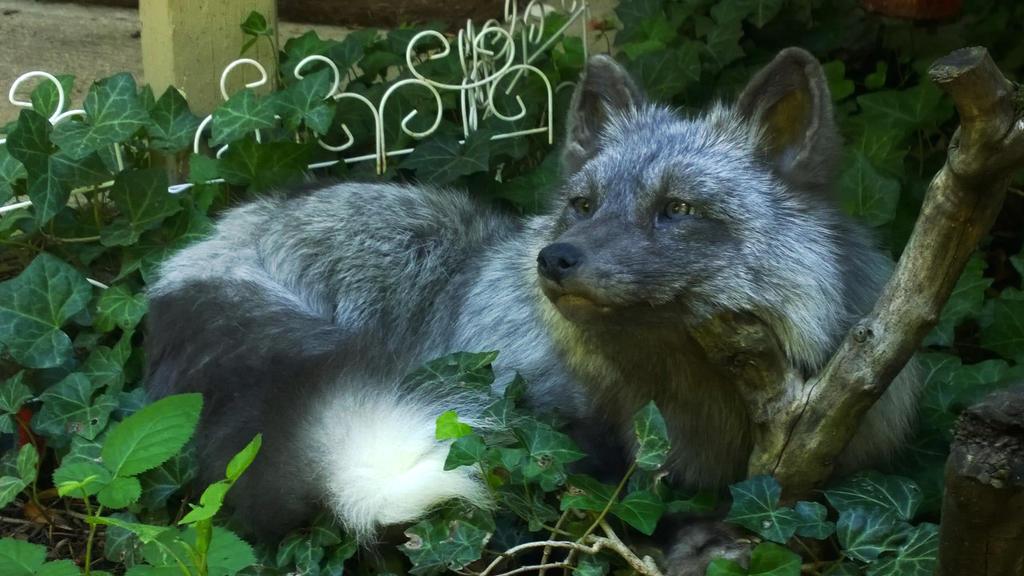 Pearl Fox by AdarkerNEMISIS