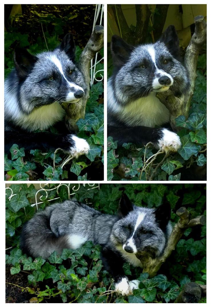 Little white mark silver fox by AdarkerNEMISIS