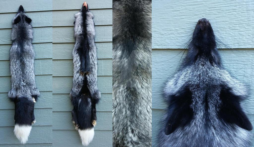Silver Fox- Helix by AdarkerNEMISIS