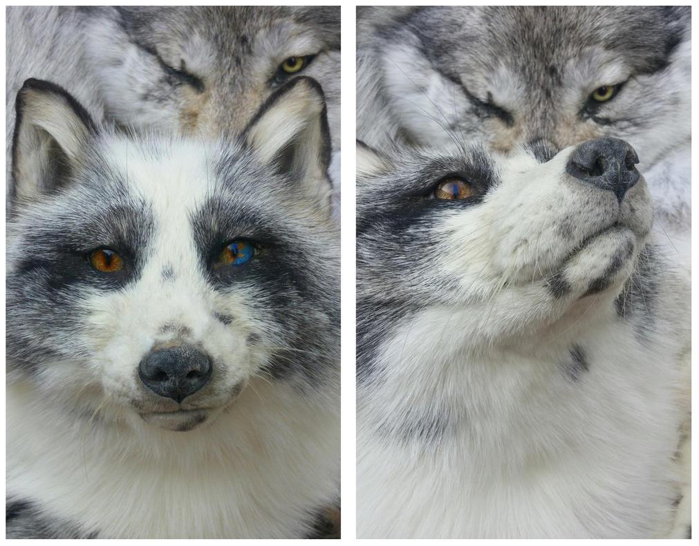 Platinum fox by AdarkerNEMISIS