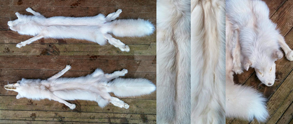 Extra pale pink fox SOLD by AdarkerNEMISIS