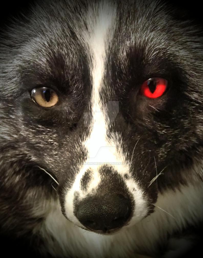 Kaneki Fox WIP by AdarkerNEMISIS