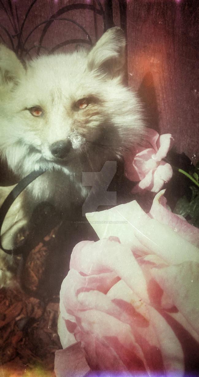 Victorian roses by AdarkerNEMISIS