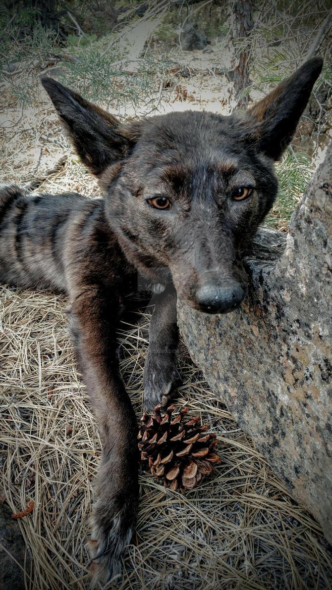 Black log dog 2 by AdarkerNEMISIS