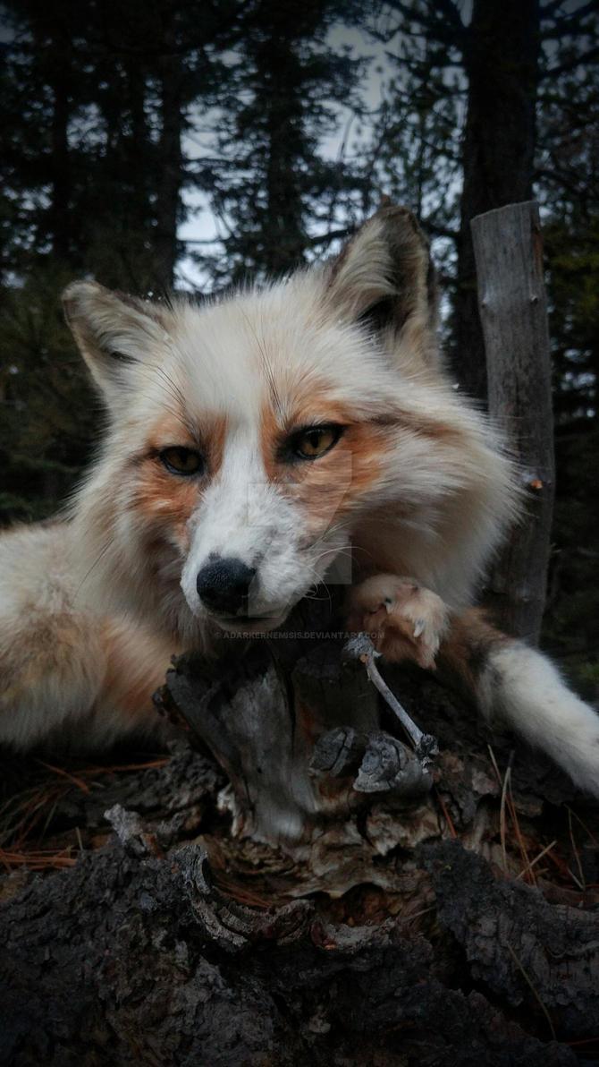 Leo Fox by AdarkerNEMISIS
