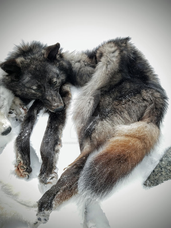 Fenris Wolf Headress by AdarkerNEMISIS