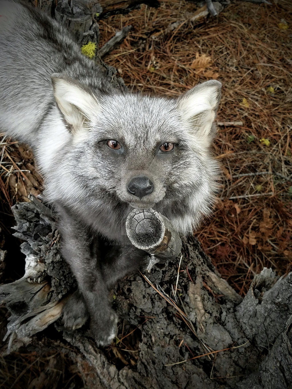 MoonGlow fox softmount by AdarkerNEMISIS