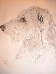Deerhound Portrait by clairobics