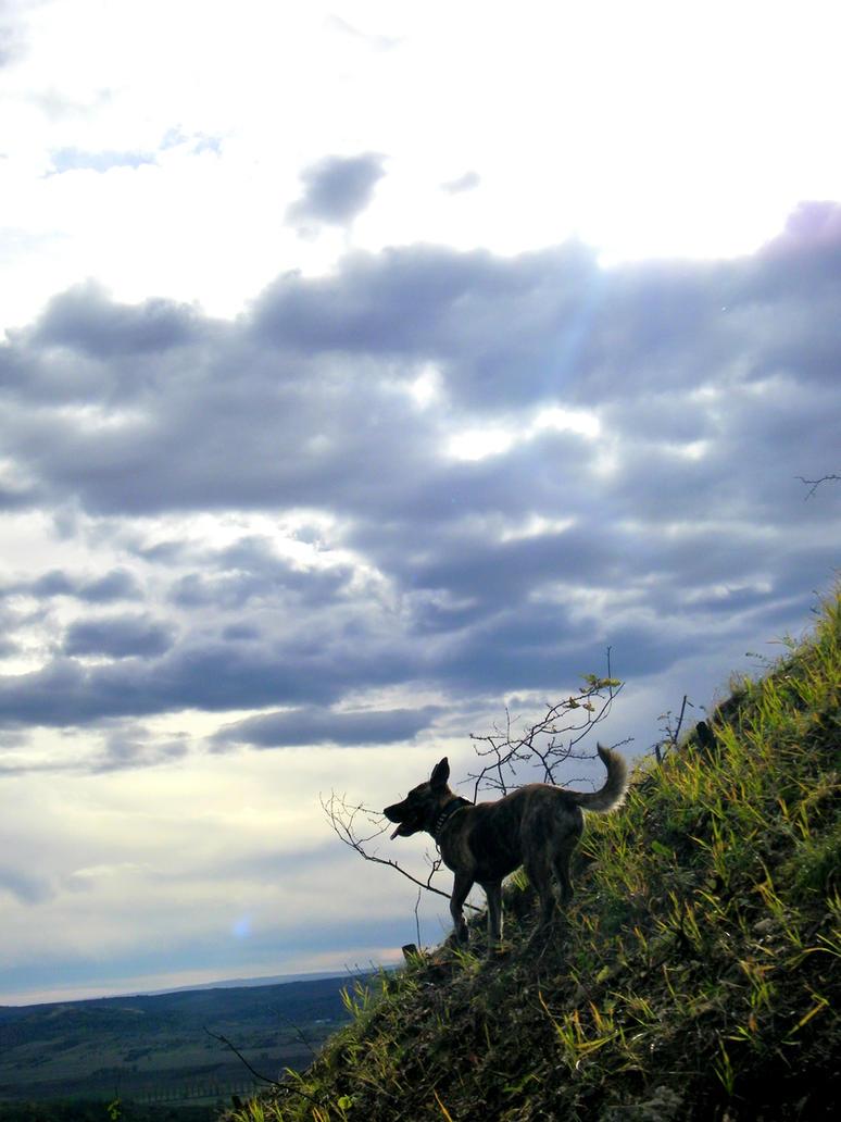 Runyic a hegyi zerge by Cuiniel