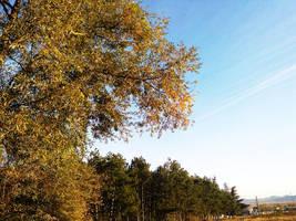 tree by Bliznaka