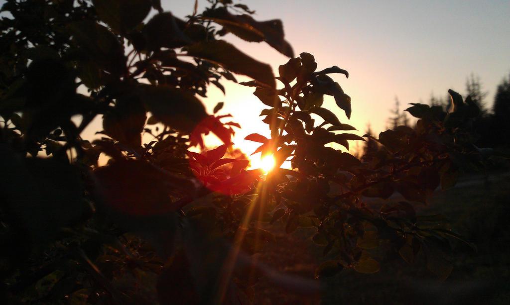 sunset (8) 2.5.13 by Bliznaka