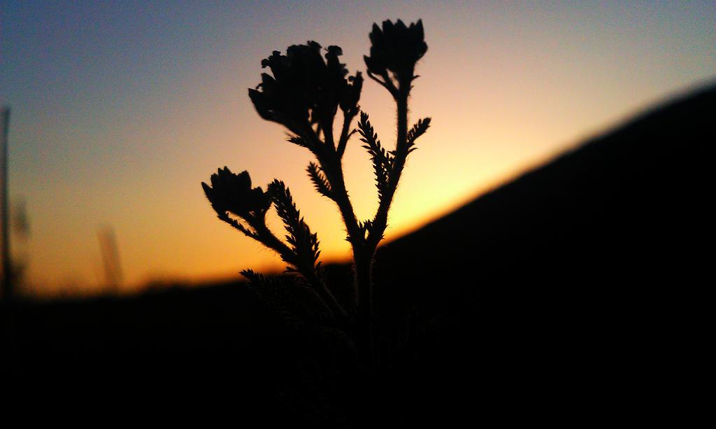 24.6.13 sunset (2) by Bliznaka