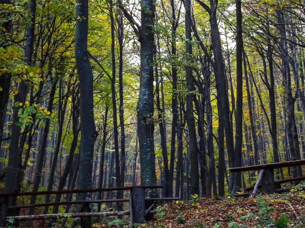 22.10.14 (16) by Bliznaka
