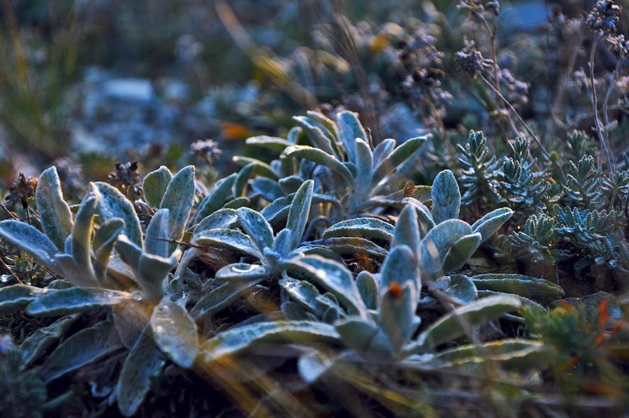 Obscure plant by DearEva