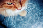A Tomcat Called Tom by venicequeenf