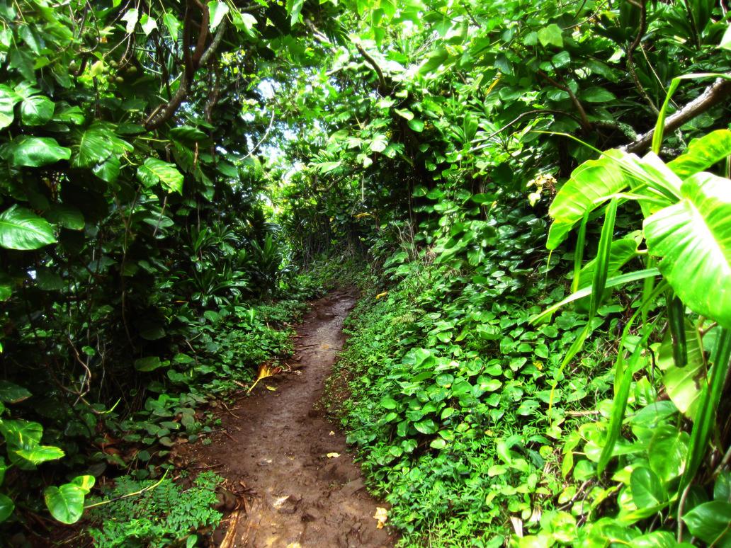 jungle path by renegadellf on deviantart. Black Bedroom Furniture Sets. Home Design Ideas